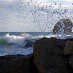 171219-Marche de Playa de Plomo à playa de Enmedio (Cabo de Gata-Andalousie) (23)