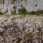 210126-(126) Marche boucle de St Léon sur Vézère (Dordogne)