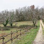 210211-(29) Marche Gorge d enfer (Les Eyzies - Dordogne)