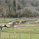 210211-(48) Marche Gorge d enfer (Les Eyzies - Dordogne)