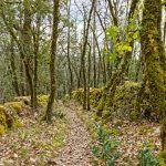 210319-Randonnée autour de Marqueyssac (Dordogne)100