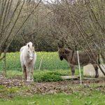 210319-Randonnée autour de Marqueyssac (Dordogne)138
