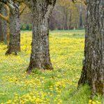 210319-Randonnée autour de Marqueyssac (Dordogne)139