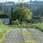 210320-(77) Cingle de Témolat (Dordogne)