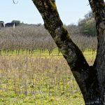 210324-(37) Randonnée autour de La Roque Gageac (Dordogne)