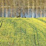 210329-(87) Cingle de Trémolat (Dordogne)