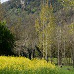 210402-(164) CASTELNAUD-De St Cyprien à Vitrac (Dordogne)