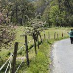 210414-(45) Randonnée autour de Beynac (Périgord noir)
