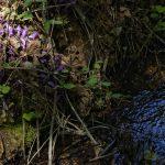 210414-(63) Randonnée autour de Beynac (Périgord noir)