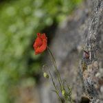 210511-(191) Balade autour de Beynac (Périgord noir)