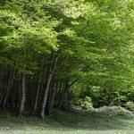 210529-(132) Lac de Bious-Artigues et Pic du midi d Ossau (Pyrénées atlantiques)