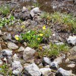 210529-(148) Lac de Bious-Artigues et Pic du midi d Ossau (Pyrénées atlantiques)