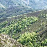 210530-(204) Col Aubisque - Randonnée boucle crêtes d Andreyt (Pyrénées atlantiques)