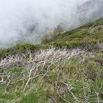 210530-(231) Col Aubisque - Randonnée boucle crêtes d Andreyt (Pyrénées atlantiques)
