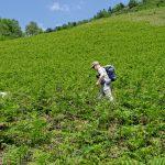 210531-(134) Bilhère en Ossau - Les Cromlechs de Lous Couraus (Pyrénées Atlantiques)