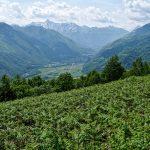 210531-(140) Bilhère en Ossau - Les Cromlechs de Lous Couraus (Pyrénées Atlantiques)