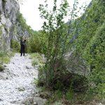 210601-(33) Chemin de la mâture (Pyrénées Atlantiques)