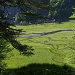 210602-(126) Bious Artigues - Vallée Sud (Pyrénées Atlantiques)