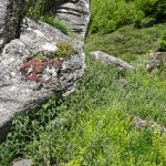 210602-(270) Col du Pourtalet - Vallée Sud (Pyrénées Atlantiques)