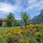 210608-(186) Vio (Aragon - Sobrarbe)