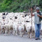 210608-(239) Le long du rio Cinca (Aragon - Sobrarbe)