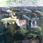 210817-(15) Aquarium Le Bugue (Dordogne)
