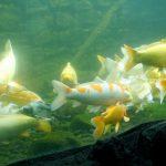 210817-(28) Aquarium Le Bugue (Dordogne)